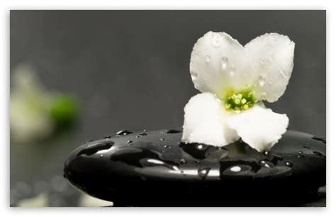 apple zen wallpaper zen stones and flower 4k hd desktop wallpaper for 4k ultra