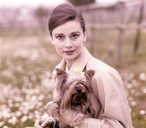 what are yorkies known for hepburn and terrier mr