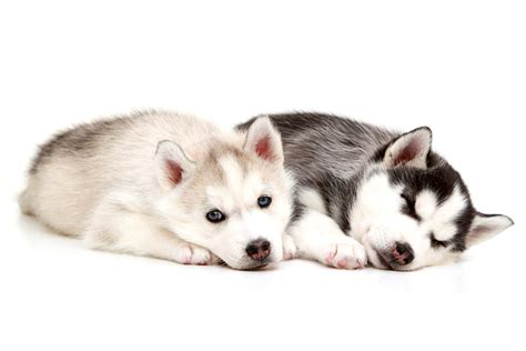 when should puppies get their the top 10 mistakes new owners make iheartdogs