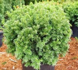 bear creek nursery shrub plant common names plant images s z