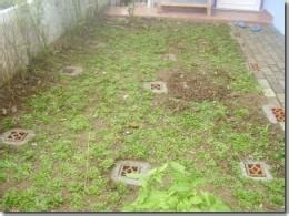 biopori adalah diary pecinta lingkungan selamatkan lingkungan sekarang