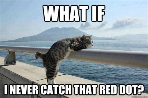 boat dog jokes sailboat funny memes funny lolcats cats on boat what if