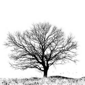 black and white tree art print black and white tree