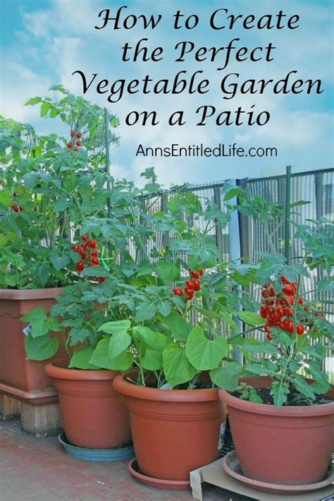 patio plus soil 25 best ideas about patio gardens on