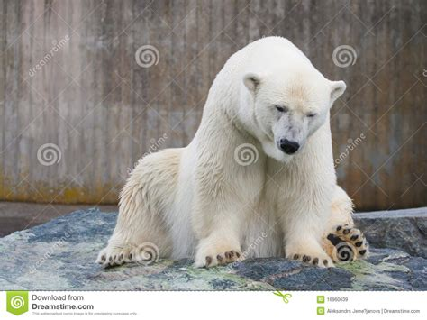 polar royalty free stock images image 16960639