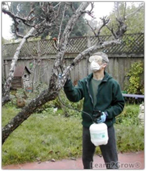 when should you spray fruit trees 171 godolphin tree service