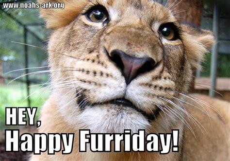 Friday Meme - happy animal memes www imgkid com the image kid has it