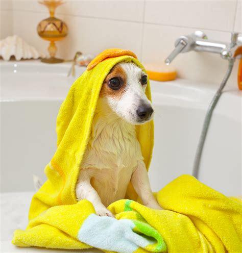puppy bath time your bath time edition dgp for pets