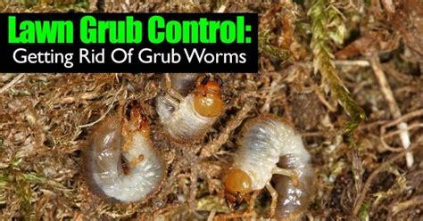 best way to kill grub worms blablapartner com