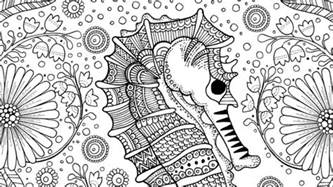 free seahorse colouring adults crafts sea