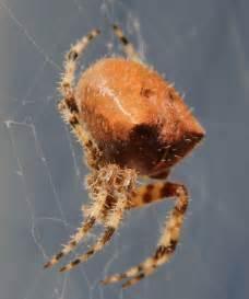Garden Spider Saskatchewan 12 Bugs Found In Minnesota
