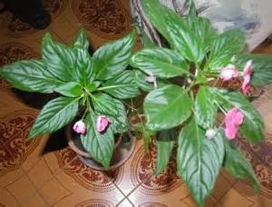 plantes d int 233 rieur fleuries archives jardiner avec jean
