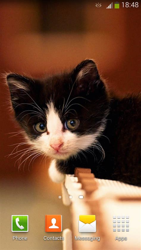 cat live wallpaper for pc cute cats live wallpaper android apps on google play