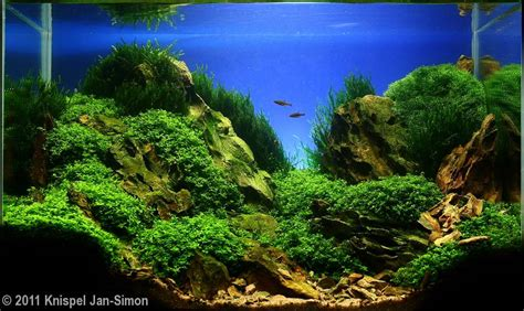 How To Aquascape A Planted Tank by 2011 Aga Aquascaping Contest 193