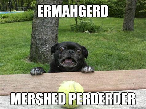 Ermahgerd Animal Memes - ermahgerd mershed perderder berks dog quickmeme