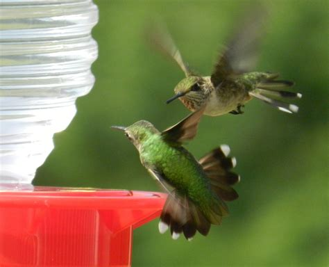 lessons from a hummingbird living at the center writing