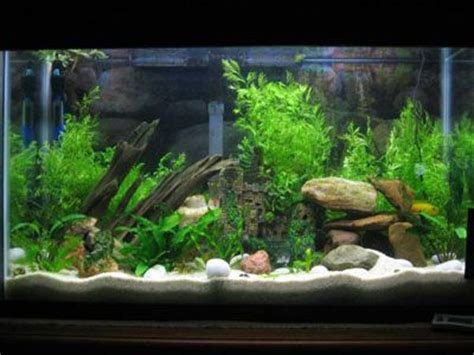 How To Set Up An Aquascape by 20 Best Images About Aquarium Set Up Ideas On