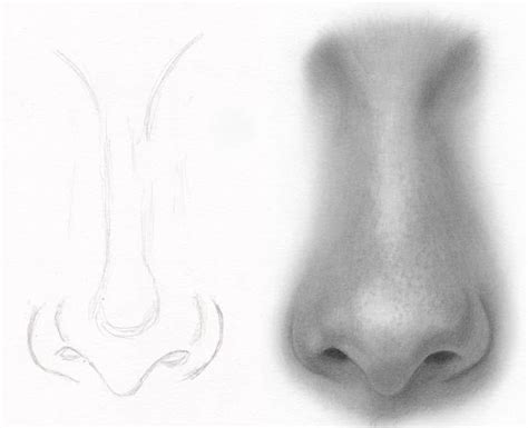 Sketches Nose by Best 25 Nose Drawing Ideas That You Will Like On