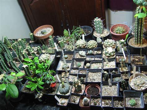 indoor coca plant  ethnobotanical garden shroomery