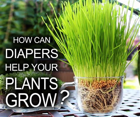 diapers help your plants grow