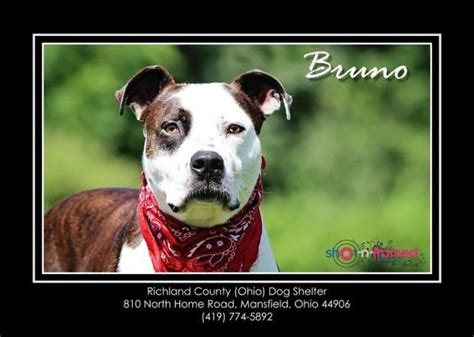 richland county shelter 17 best images about midwest states pets urgently needing on