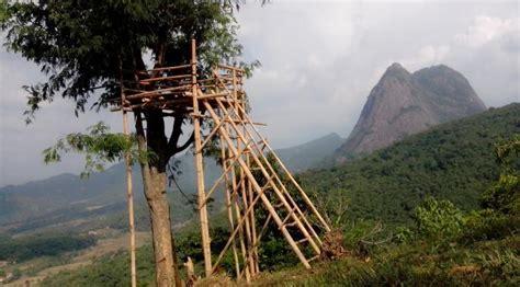 Batu Akik Motif Tanah Retak 41 gunung lembu yang menipu regional liputan6