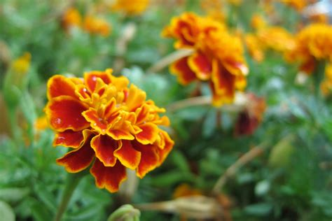 flowers that bloom in fall perennial plants for fall perennial flowers hgtv best fall
