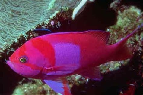 bright colored fish bright colors images bright colored fish wallpaper and
