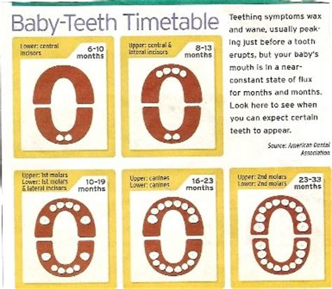 how to tell a 4yr how babies come out of mommys tummy what teeth come after 12 month molars and when teething