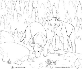 wolf coloring pages free printable pictures coloring