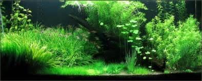 Low Light Tropical Plants - planted aquarium fertilizer home