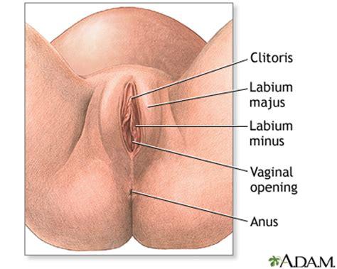 diagram of clitorus episiotomy series medlineplus encyclopedia