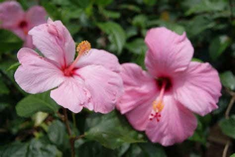 Hawaiian Flowers by Hawaiian Flowers Interlude