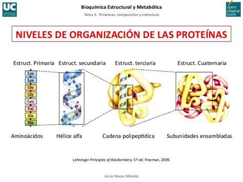 proteinas y su estructura tema 3 proteinas composicion y estructura