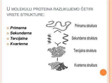 u proteini proteini i nukleinske kiseline