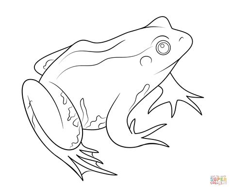 coqui frog coloring pages coloring pages