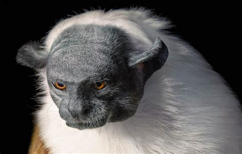 Animaux En E by Les Animaux En Voie D Extinction Immortalis 233 S En Photo