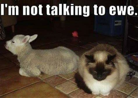 Talking Cat Meme - 21 funny animal memes and pictures of the day cute