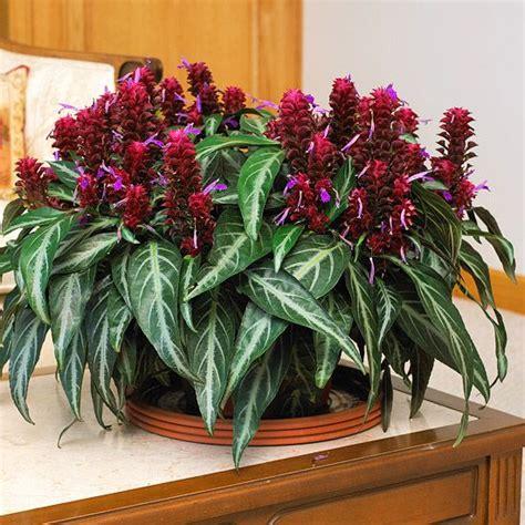 indoor flowering plants 25 best ideas about indoor flowering plants on pinterest