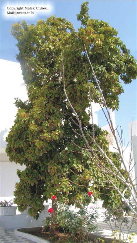 Terre Pour Avocatier by Planter Un Avocatier Tout Ce Qu Il Faut Savoir