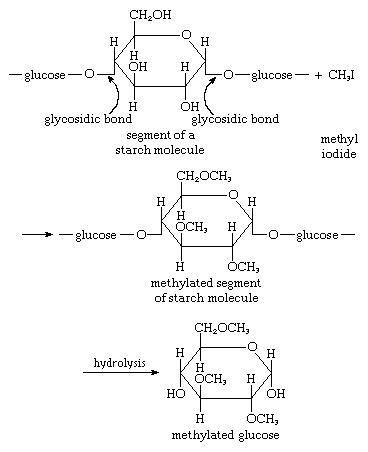 carbohydrates location carbohydrate formation of methyl ethers biochemistry