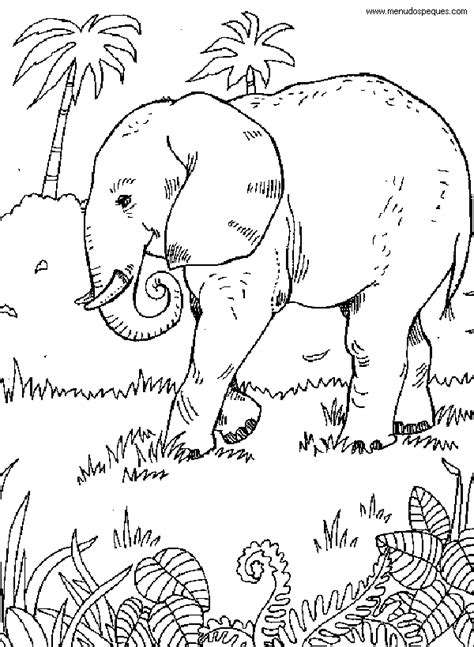 el ecosistema colouring pages titulo colorear medio ambiente