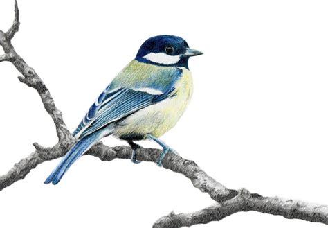 Drawing Birds by Birds