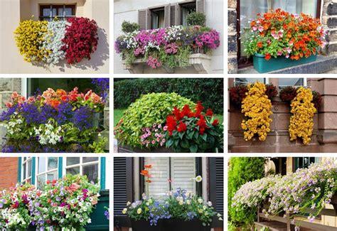 window  balcony flower box ideas  home