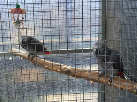 rete per gabbie uccelli rete per voliera