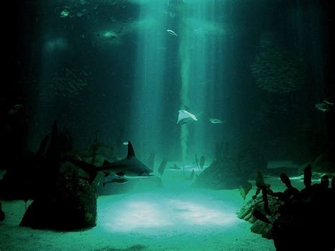 underwater themes for windows 10 underwater desktop backgrounds wallpaper cave