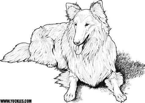 sheep dog coloring page shetland sheepdog coloring page by yuckles