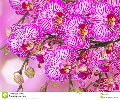 orchidea non fiorisce