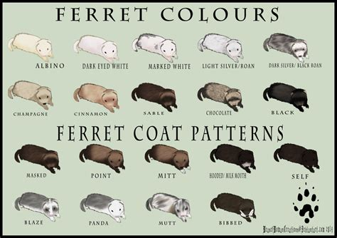 dog color pattern names ferret free coloring pages