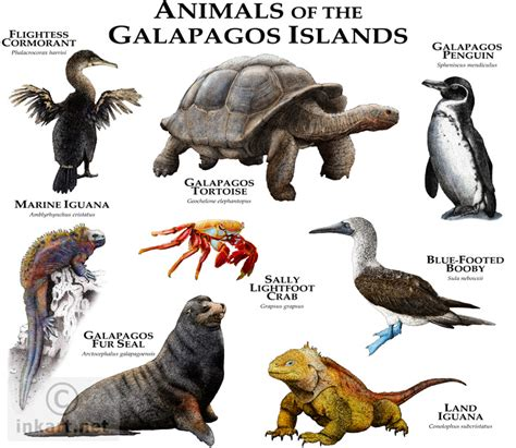 7 Amazing Animals From The Galapagos Islands by Animals Of The Galapagos Islands Illustration